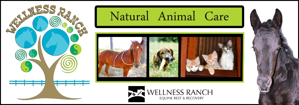 Logo Wellness Ranch
