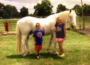 Wellness Ranch Lipizzaner Hemi