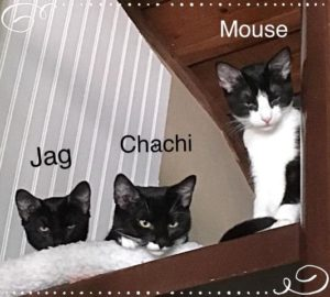 Jag Chachi Mouse